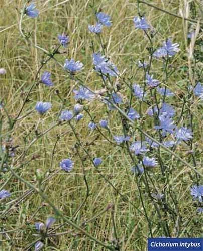 Flores color azul