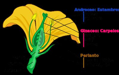 Flores y sus características