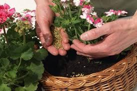 Cuándo es bueno abonar las plantas