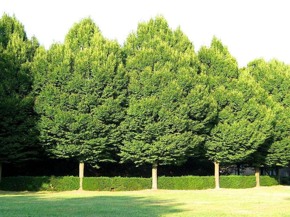 Tipos árboles ideales para embellecer tu jardín