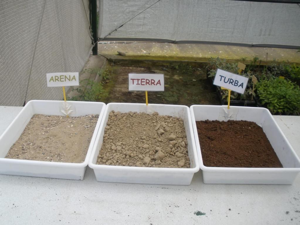 Tipos jardinería