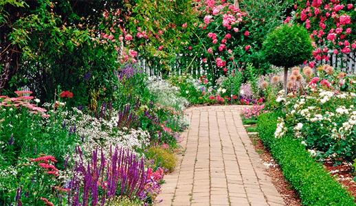 5 tips para el cuidado plantas de jardín