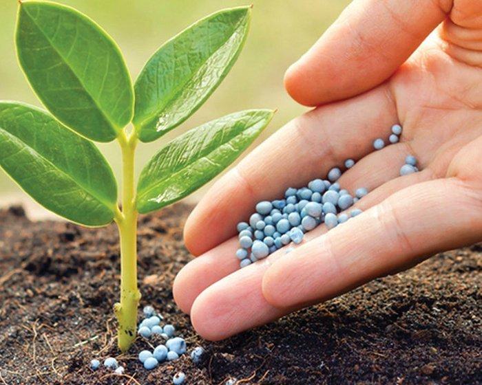 Fertilizante plantas