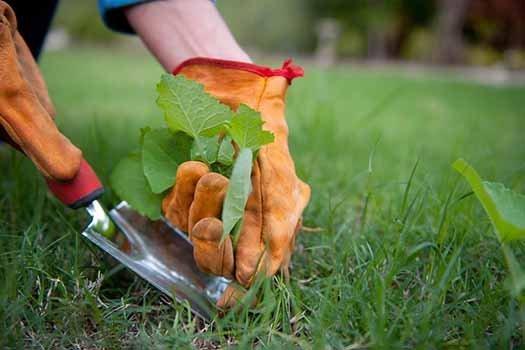 Cómo eliminar las malas hierbas jardín
