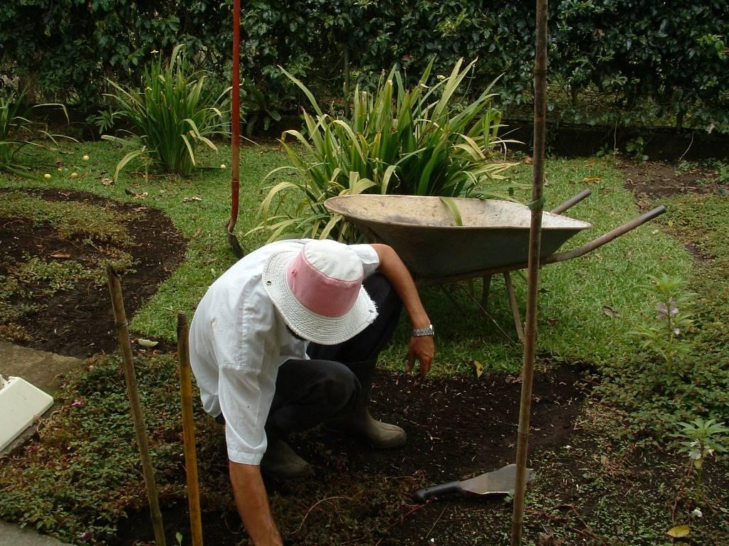 Fertilizantes ecológicos caseros