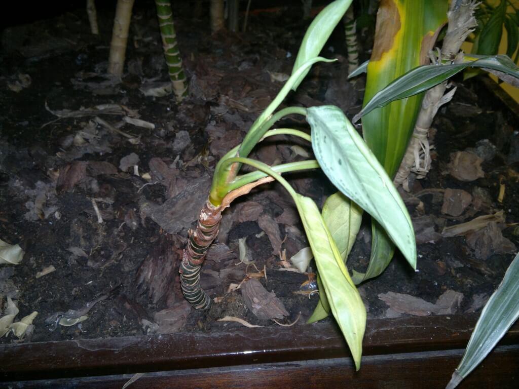 Síntomas de exceso riego en plantas