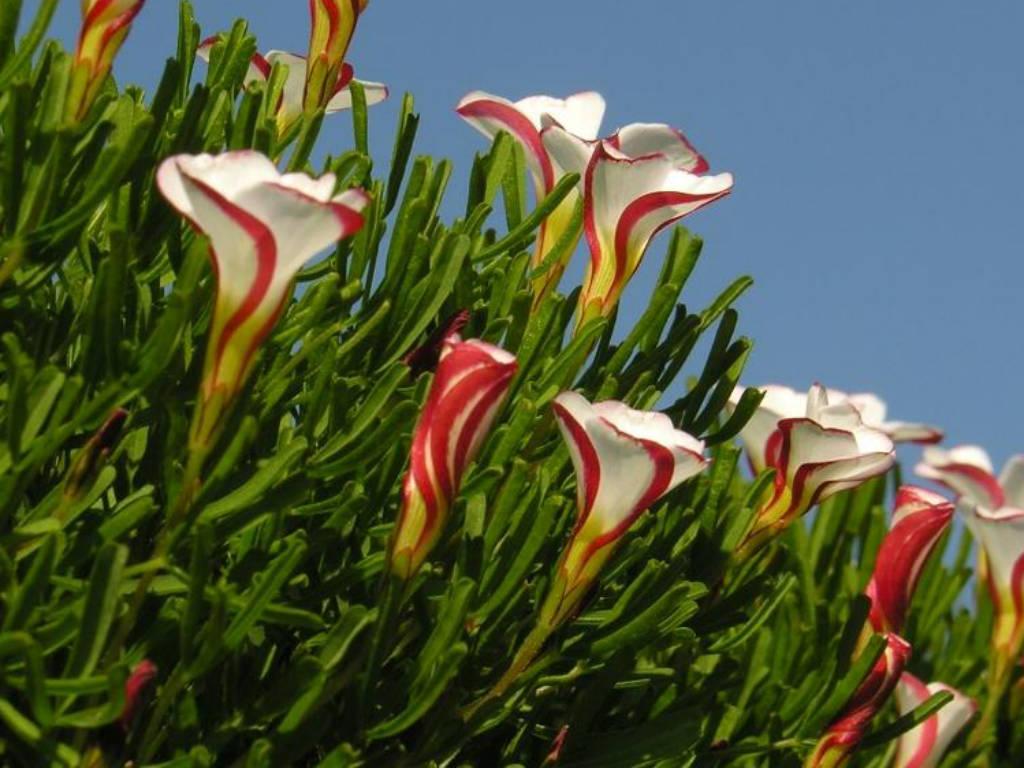 Nombres flores exóticas y su significado