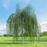 árboles para jardines grandes