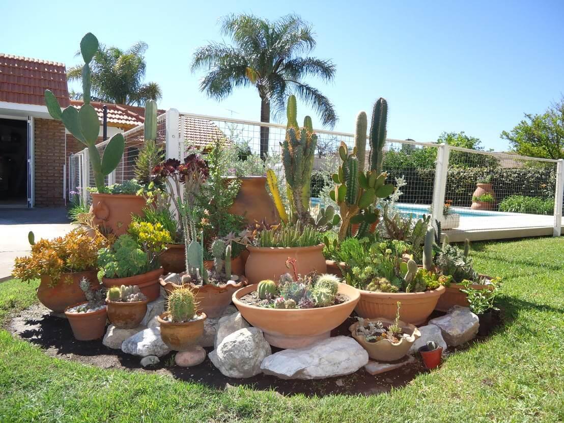 Plantas jardín desértico, jardín desértico con plantas