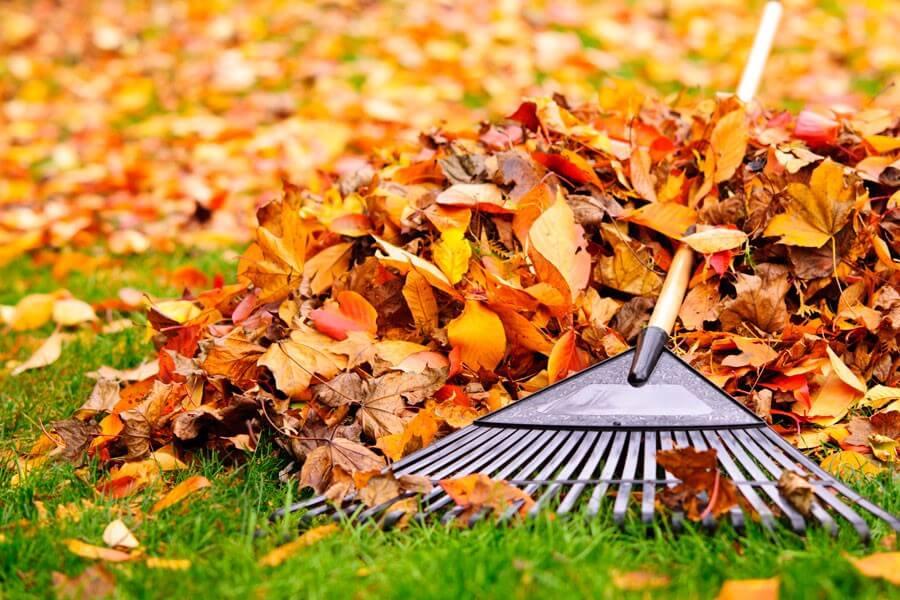 recoger las hojas del jardín